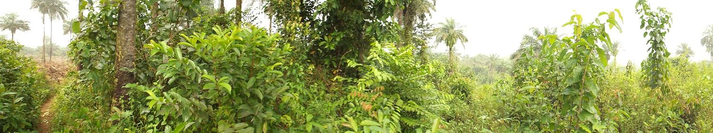 Fendell Liberia Bush.
