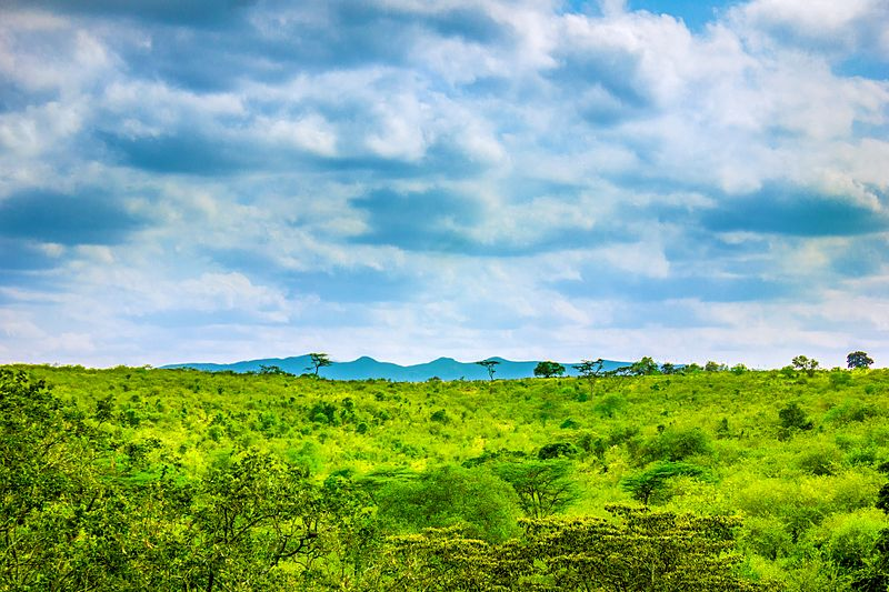 Ngong Hills in Kenya by Siegmund Kamau. I know it has nothing to do with this post, but it is much more beautiful than any pictures that would relate to this post!