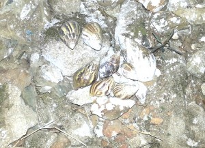 One time when I was bored in Liberia, I collected snail shells. Wish I would have thought of this activity earlier.